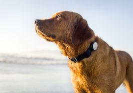 Collare GPS per cani - Come funziona e come scegliere quello giusto